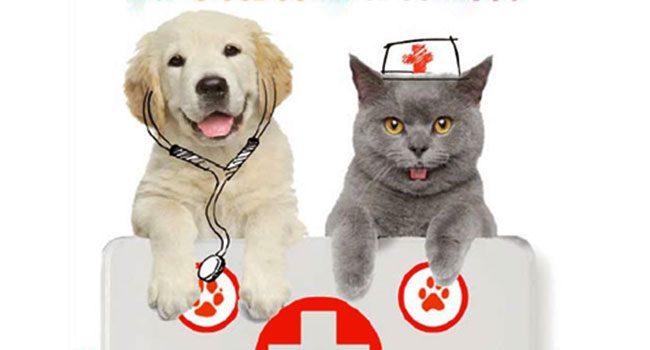 Apre la banca del sangue per cani e gatti: servizio unico in Sardegna un servizio unico in Sardegna