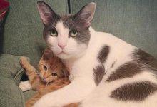 In cinque anni questo super papà adottivo si è preso cura di 25 gatti in difficoltà