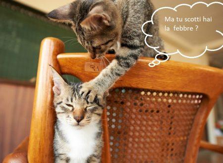 Caldo – 5 accorgimenti per la salute del tuo gatto