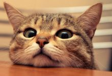 Un gatto può cambiarti la vita in pochissimi giorni.