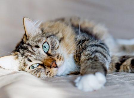 Verifica la salute del gatto