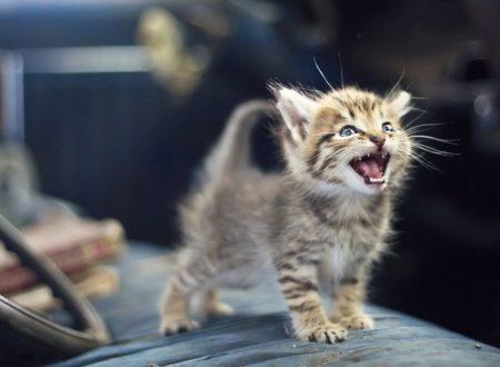 Parlare con un gatto: Il gatto ci capisce ? E quante parole riesce a capire ?