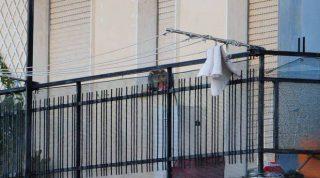 gatto-sul-terrazzo-a-vado-222569.660x368
