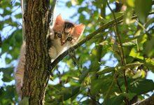 Chi ha un gatto sa che non si gli può nascondere nulla. Capisce subito se hai qualcosa con non va