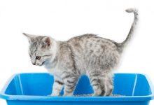 Ti sei mai domandato come mai il tuo gatto ricopre i suoi bisogni?