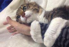 Come fanno i gatti a capire il nostro stato d'animo