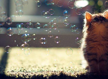 Perché amiamo i gatti cosi tanto ?