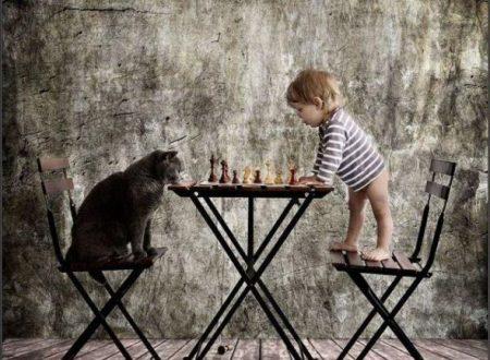 Un gatto è capace di trovare sempre nuove soluzioni per affrontare le diverse situazioni