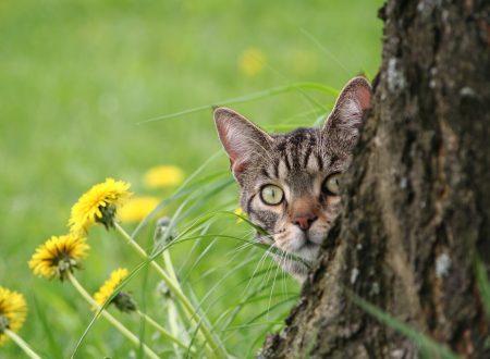 Quando il benessere arriva dai gatti