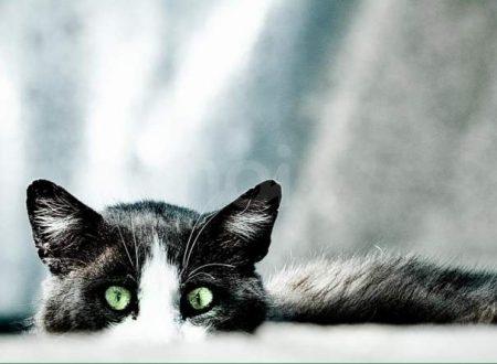 Umani gatto dipendenti