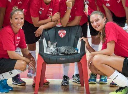 Volley, al PalaYamamay c'è un gatto. Le farfalle dell'UYBA lo adottano