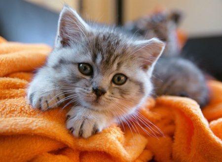 Se dopo aver letto questo articolo desiderate ancora avere un gatto sei un gattaro DOC