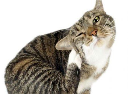 Se i gatti diventano allergici agli uomini