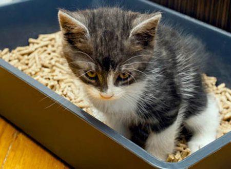 Comportamenti strani del gatto: Scappa dopo aver usato la lettiera