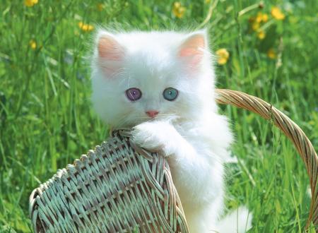 I gatti sanno davvero comunicare telepaticamente con i loro umani ?
