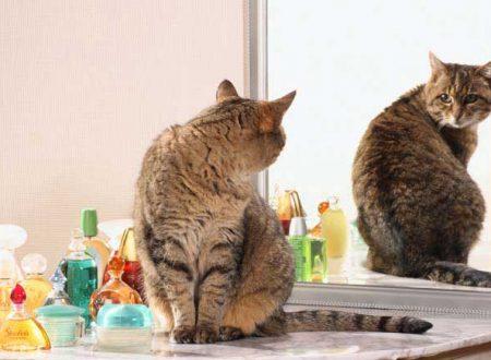 Perché i gatti ci seguono in bagno?
