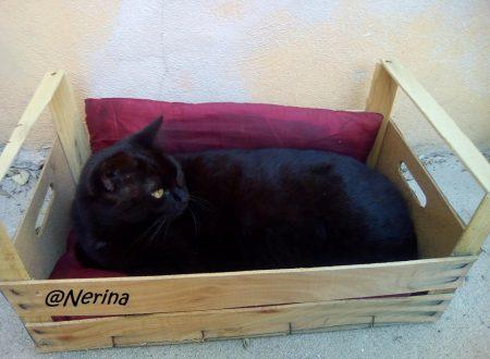 Gatti neri, eleganza… non superstizione