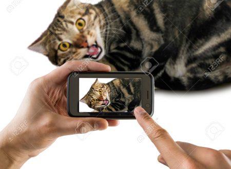 Inviaci la foto del vostro gatto