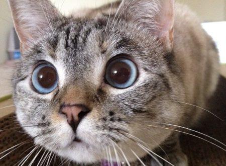 Farmaci che sono presenti nelle nostre case e pericolosi per il gatto