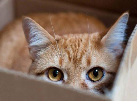 Come conquistare la fiducia di un gatto