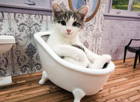 Kattarshians, il reality show sui gatti per favorirne l'adozione