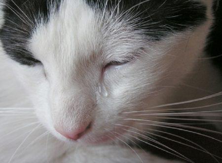 I gatti piangono ?