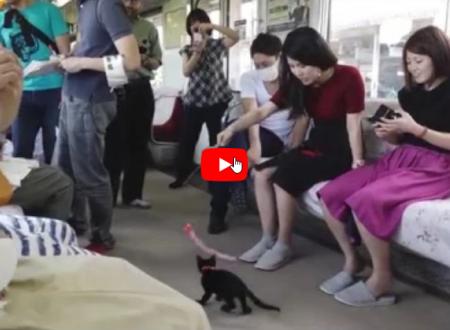 Giappone: Una giornata in un treno Cat-Cafe