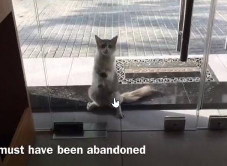 È senza casa. Uno dei tanti gatti che girano per la strade del Libano. Ma in questo caso lui ha fatto una scelta