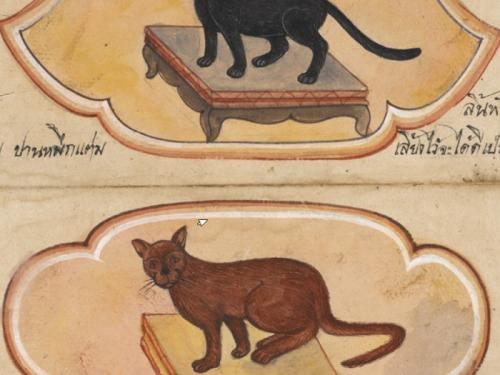 Gli 8 manoscritti thailandesi chiamatiTamra Maew, che tradotto significalibro dei gatti