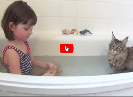 Un gatto è l'angelo custode della sua sorellina umana autistica