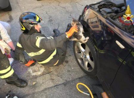 I gatti ringraziano i vigili del fuoco