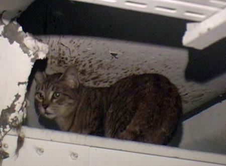 La storia di Romeo, il gatto cacciato da un'assurda decisione dall'ospedale di Sanremo