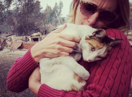 CALIFORNIA: Ha perso tutto per gli incendi, ma quando torna a casa ritrova il gatto