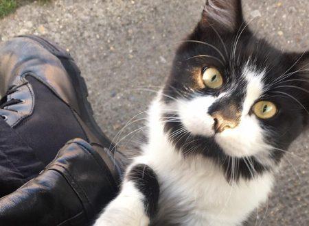 Il gatto che intrattiene i pendolari alla fermata