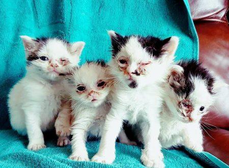 Cane salva la vista a tre gatti appena nati, donando loro il suo sangue