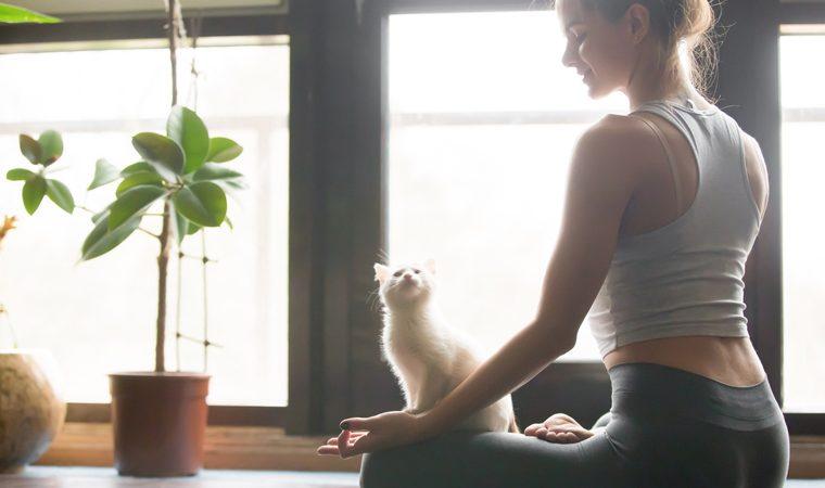 Negli States: Sessioni di yoga con i gatti pronti per essere adottati
