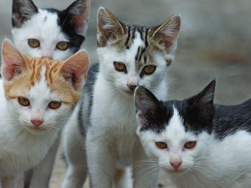 La Spezia, la suora che maltrattava i gattini