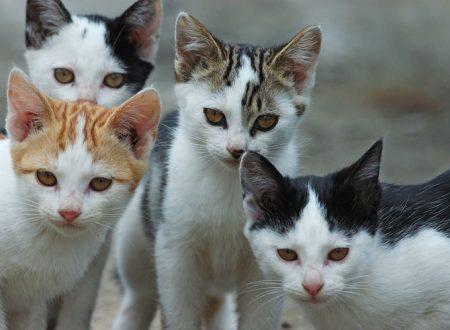 La serial killer dei gatti è tornata. Fermatela. L'appello dei romani
