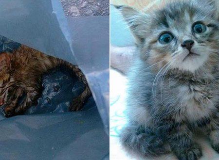 Gettati nella spazzatura come rifiuti: boom di abbandoni di gatti nel ventimigliese