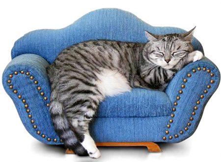 Gatti opportunisti? I gatti amano solo chi li sfama ?  Chi lo pensava si deve ricredere
