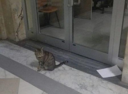 La storia del gatto Romeo sfrattato dell'ospedale finisce in tribunale
