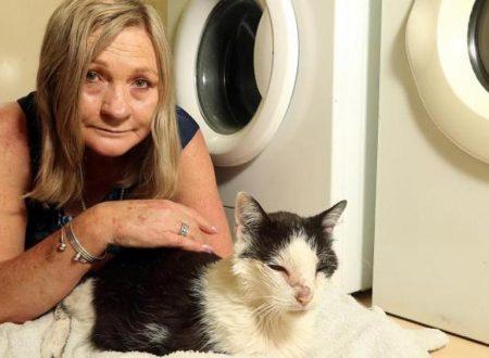 Gatto di 18 anni si intrufola nella lavatrice e sopravvive al lavaggio