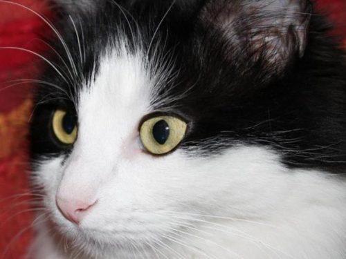 Comportamento distruttivo e gerarchie dei gatti