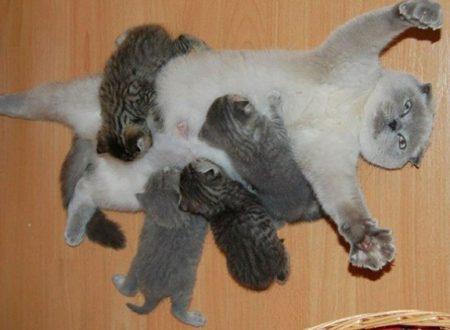 L'abbandono precoce dello svezzamento aumenta l'aggressività e il comportamento stereotipico nei gatti
