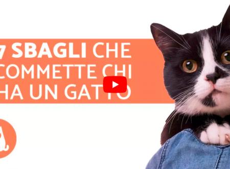 Prendersi cura di un gatto i 7 errori più comuni che commettono