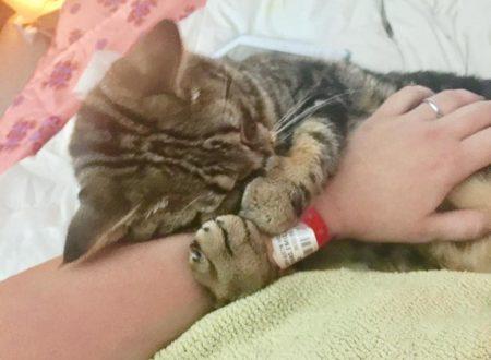 Donna trova un gatto in difficoltà nella stessa città dove era stata abbandonata lei alla nascita