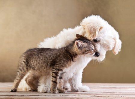 Veterinario torturava gli animali anziché curarli