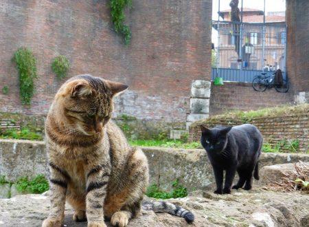 Shopping natalizio tra i gatti di Piramide… ma non solo