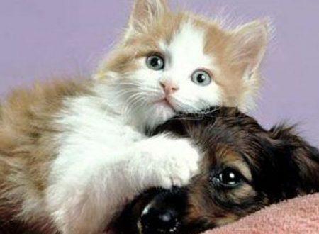 Allarme dei veterinari abusi in famiglia bruciature di sigarette su cani e gatti