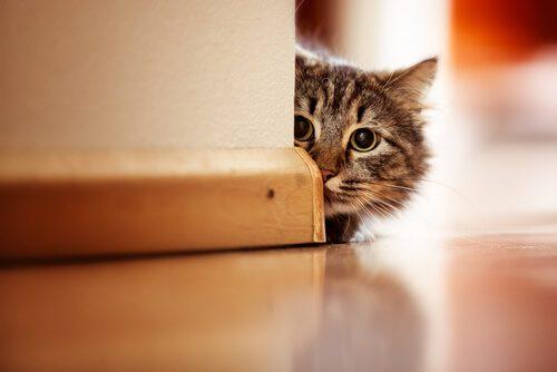 I gatti soffrono di fobia, le cause principali e cosa fare
